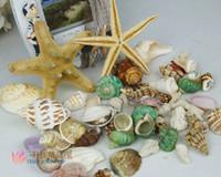 Wholesale Natural Pieces sea shells snail Conch and Pieces Starfish home decor aquarium decoration fishbowl nautical
