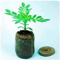 Nursery Pots - 50 Count mm Jiffy Peat Pellets Seeds Starting Plugs Nursery seed tray Pots Flower Pots Planters Seedlings Early Soil