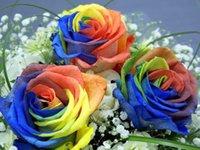 Wholesale 1000pcs pack Rare Holland Rainbow Rose Flower Seed Rose seeds