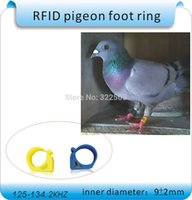 Cheap foot ring Best pigeon foot