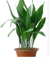 Wholesale 50 bag Aspidistra seeds potted seed flower seed variety complete the budding rate