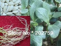 Wholesale excellent cucumber rootstock Bright cucumber seed cucumber dongsheng