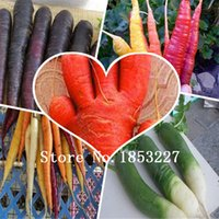 Wholesale 50seeds Five Inches Carrot seed good taste yard or potted fruit vegetable seeds for home garden planting