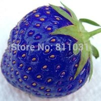 Cheap bonsai plant Best 100pcs bag