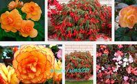 begonia mix - Mix Colors Begonia Seeds bag Flower Seeds Garden Bonsai Flower Orginal Packing