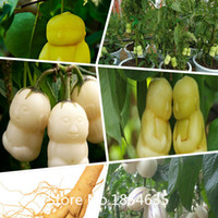 Cheap Garden Plant 100pcs Genuine Chinese hardy Panax Ginseng Korea Ginseng Seeds plant Seeds Bonsai Seed