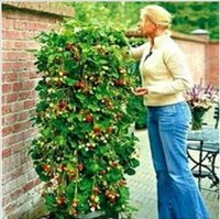 Cheap 200pcs. Vegetables and fruit seeds Red strawberry seeds Climbed up Bonsai plants Seeds
