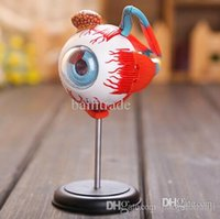 anatomical eye model - New D MASTER Human Eye structure anatomical model Science toy Three dimensional jigsaw puzzle Medical model