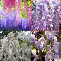 Wholesale Hot Selling Wisteria Flower Seeds15 varieties A variety colors