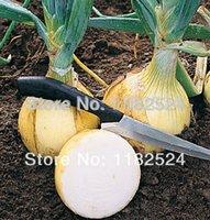 allium cepa - 250 SEEDS Ailsa Craig Exhibition Onion Seeds Vegetables Allium cepa seeds