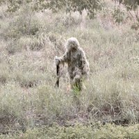 Wholesale One Size for All Adjustable Elastic Breathable Woodland Camouflage Ghillie Suit for Hunting CS War Games Paintball Clothing