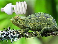 Wholesale 1Pcs Reptile Compact Fluorescent Vivarium Lamp Light UVB UVA UV W E27 Screw Light P415