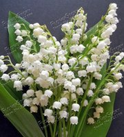 Wholesale 50 Lily of the Valley flower seeds bell orchid seeds rich aroma bonsai flower seed so cute and beautiful
