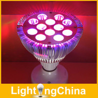 Wholesale New Arrival LED Grow Lights Full Spectrum PAR20 PAR30 PAR38 E27 W W W W W W W For Plants Grow Red Blue LED year Warranty