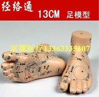 acupoint model - 10pcs cm foot model model acupoint meridian through foot model