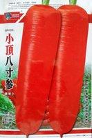 Cheap Carrot Vegetable Best vegetable seeds
