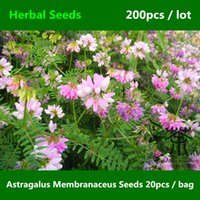 Common astragalus plants - Flowering Plant Astragalus Membranaceus Seeds Family Fabaceae Astragalus Propinquus Seeds Very Popular China Medicine Huang Qi Seed