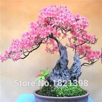 azalea gardening - Spring Bonsai azalea Seeds kinds mix Flower Seeds Novel Blooming Plant for Courtyard Garden