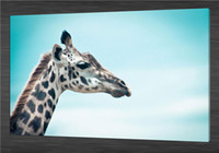 animal zoo pictures - HD Canvas Print home decor wall art painting Picture NO stretch Giraffe Zoo x36