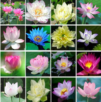 Wholesale colorful waterlily seeds lotus flower seed Gorgeous Aquatic plants seeds lotus seeds color T02