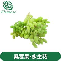 preserved flower - Flower preservation floral import mulberry fruit preserved flower unfading flowers zaka Hua He produced pictures