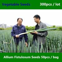 allium plants - Much Loved Welsh Onion Allium Fistulosum Seeds Very Popular Salad Onion Vegetable Seeds Primarily Used As Scallion Seeds For Planting