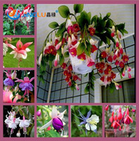 begonia seed - 100 Bag Fuchsias Seeds Potted Flowers Diy Planting Flowers Bell Flower Lantern Begonia Mixed Color