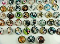 Wholesale fashion charm pet Dog series mixes High quality Alloy Chunk Snap Button charm fit NOOSA bracelet diy Jewelry Accessories