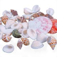 Wholesale Hot Approx g Beach Mixed SeaShells Mix Sea Shells Shell Crafts Sea Shell Decoration Aquarium
