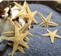 art meat - 100pcs Natural mini starfish meat bottle decoration size0 cm natural sea star