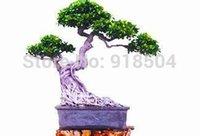 Cheap 50pcs 2015 Rare Genuine Ficus Ginseng seeds 22kinds mix pack Ginseng Herbs seeds Banyan tree seeds Free Shipping