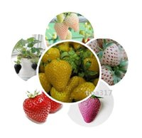 Cheap Fruit seeds strawberry seeds DIY Garden fruit seeds potted plants 27 kinds strawberry seeds 100pcs lot 1737