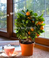 Wholesale 20pcs Edible Fruit Mandarin Bonsai Tree Seeds Citrus Bonsai Mandarin Orange Seeds