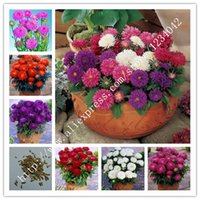 Wholesale 10 colors Japan imported Aster Seed mix China aster seeds PC bonsai flowering plants