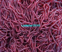 Wholesale 50Pcs cm Simulation Earthworm Worms Artificial Fishing Lure Tackle Soft Bait Lifelike Fishy Smell Lures Red