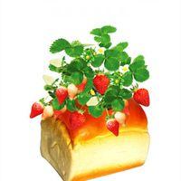 Cheap plastic plant pots Best cute creative indoor plant