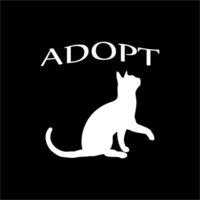 adopt a cat - Car Stickers Adopt A Cat Vinyl Sticker Decal Car Window
