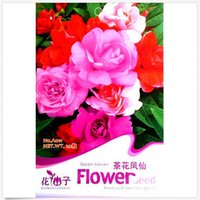 balsam plants - 20pcs Seed Camellia Garden Planting Colorful Balsam Flower Seed for Four Seasons