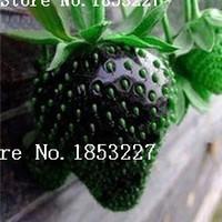 Cheap fruit seeds Best strawberry seeds
