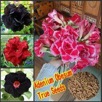 Wholesale 100 Genuine Fresh Rare Adenium Obesum Seeds rose flower plant seeds