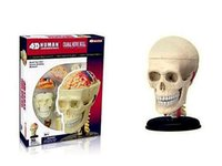 anatomy children - Children DIY Puzzle Human organ Anatomy head skull Model D CutAway NEW