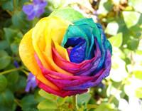 El envío gratuito Rainbow Rose Seeds * 100 unidades Semillas por paquete * nueva llegada coloridas encantadora hermosa plantas de jardín
