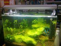 acrylic aquarium stands - Fish tank cm stands aquarium lamp crystal shrimp lamp retractable lamp