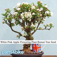 Cheap 1 Professional Pack, approx 10 Seeds   Pack, White Pink Apple Flowering Plant Bonsai Tree Seed #NF336