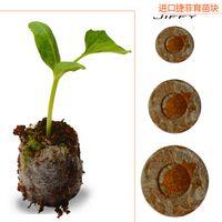 Wholesale 2000pcs Count mm Jiffy Peat Pellets Seed Starting Plugs Seeds Starter pallet seedling soil block