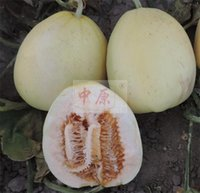 Wholesale Pellicle sweet white melon seeds Zhonyuan9013 to all the WORLD