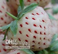 Wholesale 500pcs White Cream Strawberry Seeds pineapple strawberry Seeds