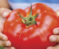 beef tomato - 9000pcs a set Big Beef Hybrid Tomato Fruit Seed HOME GARDEN DIY Very Rare And Reasonable Choice