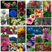 annual flower garden - 3600Pcs Flower DIY Home Garden Seeds Kinds Amazing Perennial Annual Easy growing