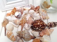 bathroom set china - 450g CM One Set Household bathroom products Mediterranean romance platform decoration decorate wedding starfish conch shells